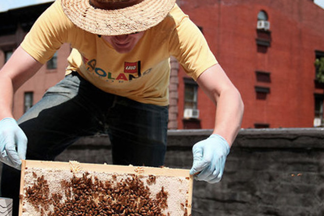 Urban Beekeeping documentary still